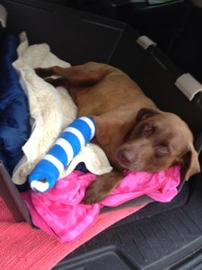 Daisy has found her family but has surgery in her future