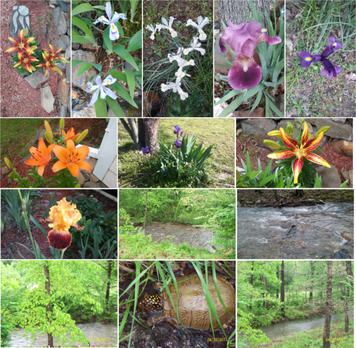 111 Little Bear Trail: Flowers, creek and turtle