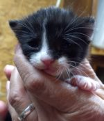 image of baby kitty